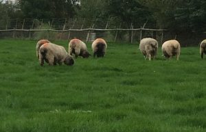A rainbow of bottoms – Lambing 2018