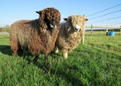 Ashtree and Ewe - home of the Leicester Longwool sheep